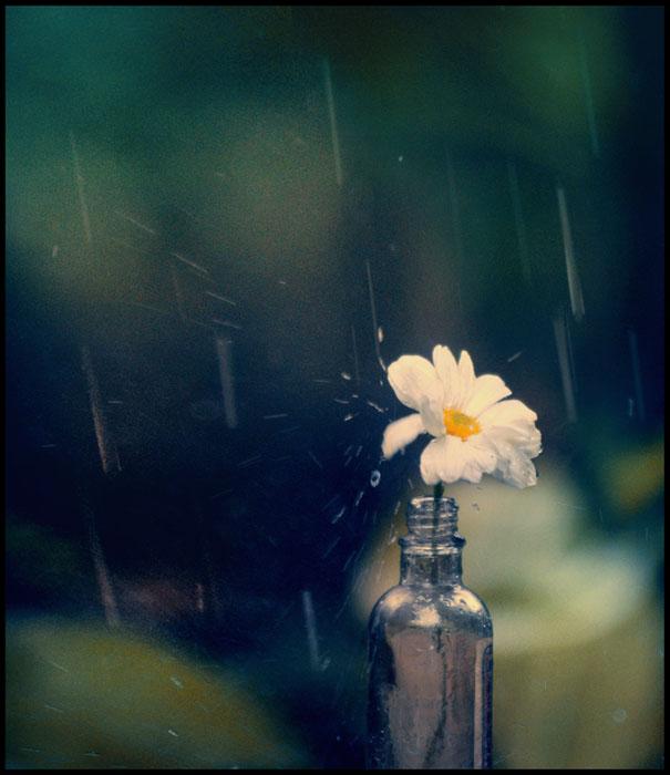 like a sad song flower rain bottle