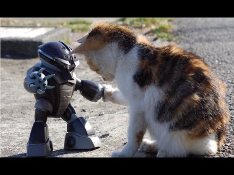 robot and kitten cat