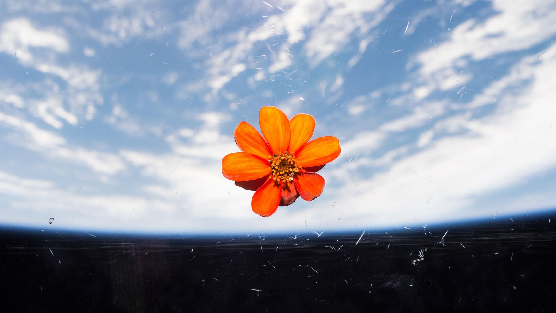 flower space planet terraforming romance